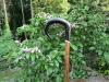Welsh black rams horn market stick