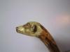 meerkat-on-holly