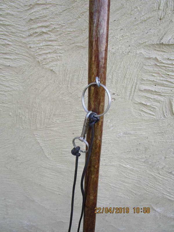 Stag antler wading stick