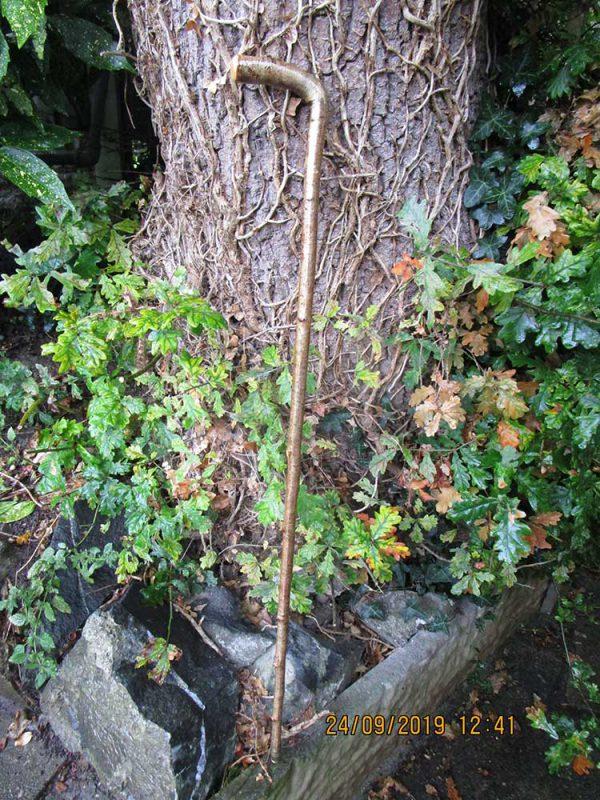 One piece Hazel walking stick