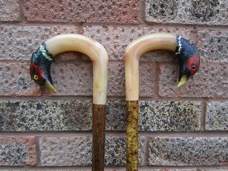 A pair of rams horn cock pheasants