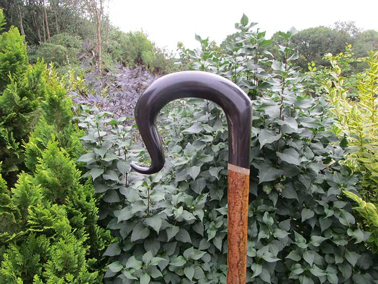 Buffalo horn crook
