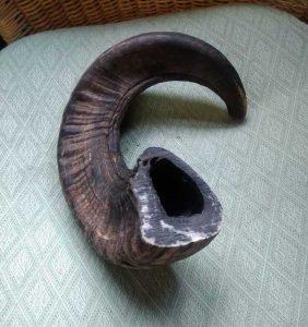 jacob horn